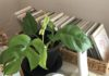植物の成長に心がほろり。あふれる涙が心の苦しさを軽くしてくれる