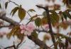 草餅、桜餅、ぼた餅…どれが好きですか? いいことはどこにあると思いますか?
