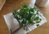 ドクダミが好き。可憐な花が咲き終わってもハートの葉っぱも魅力。生命力旺盛な植物が好き