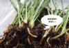 おうちでグリーンを愉しむ。観葉植物、根腐れ&コバエ対策