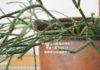サボテンが育っています♪観葉植物を育てるコツは日々の観察を楽しむこと